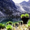 Kenya, Mountain, Senecio,lake,