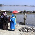 Pirouge, Canoe, Senegal river, fish,