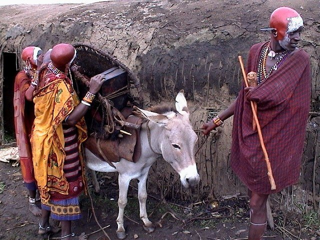 Kenya, loading the donkey